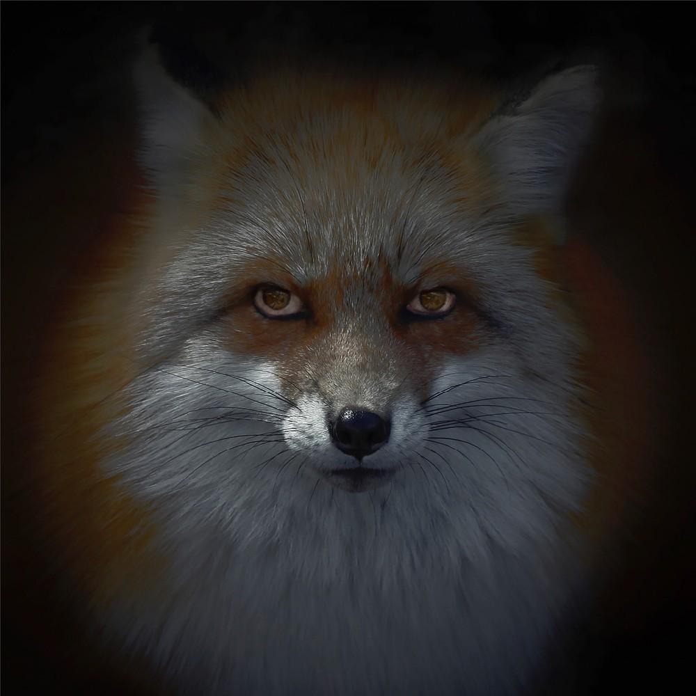 Luke Hardy kitsune-bi [foxfires] X 2018 image 60cm x 60cm pigment print on archival art paper Framed 2,800