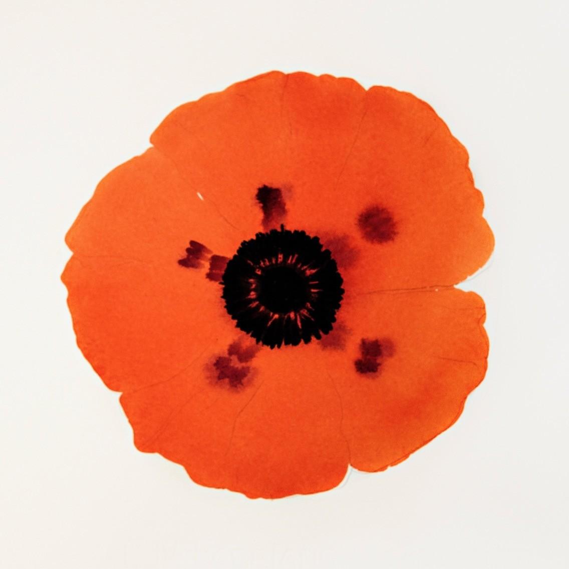 orange flower with black centre STAN ST