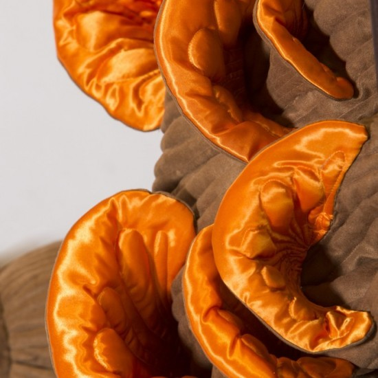 Honey Fungus, Augmented Table