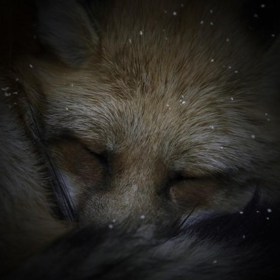 kitsune bi [foxfires] VI 2017
