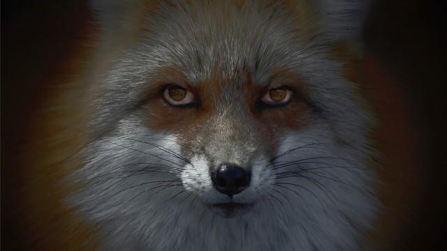 Foxfires [kitsune-bi] - HeadOn Photo Festival