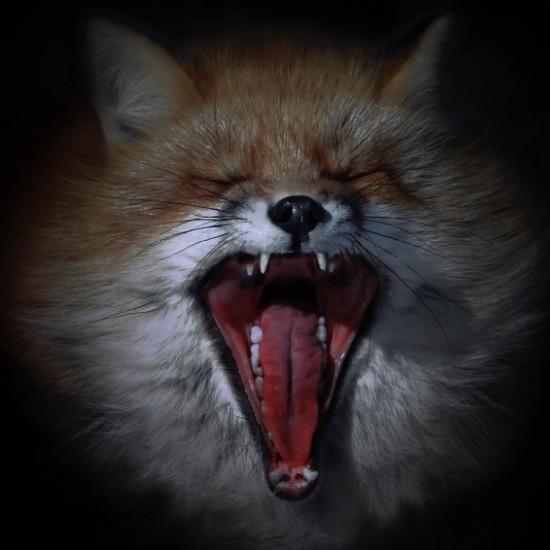 kitsune bi [foxfires] XIV 2018