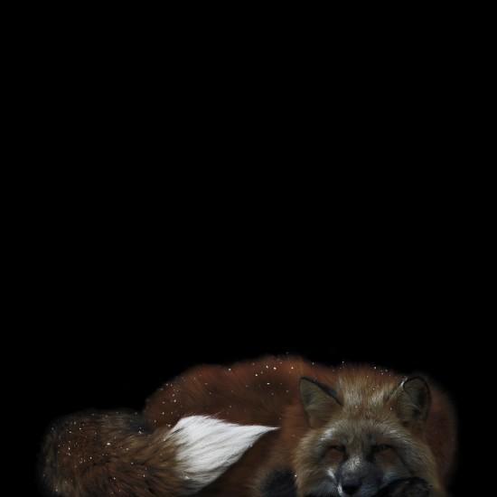 kitsune bi [foxfires] I 2017