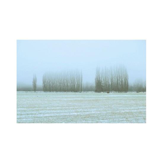 03 Poplars in mist near Geraldine