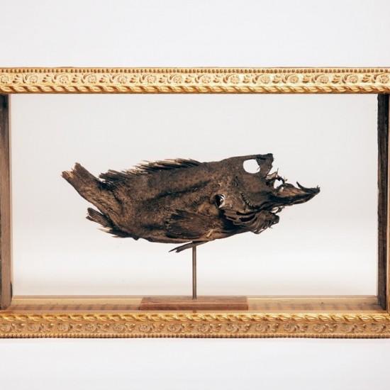 The Last Fish